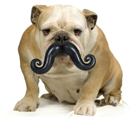 Pet Stache Ball Dog Toy
