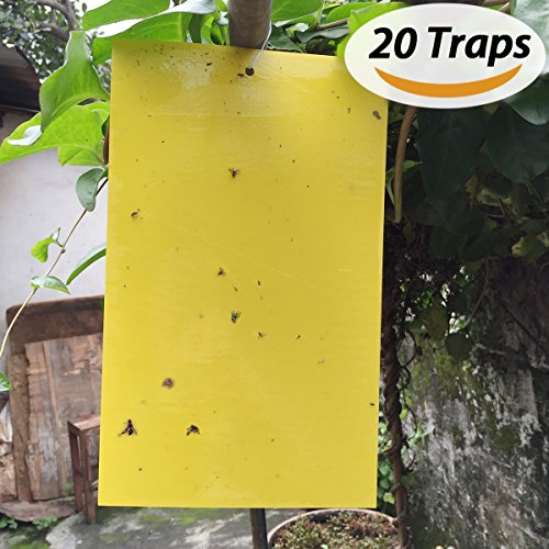 beskit-20-pack-dual-sided-yellow-sticky-traps-for-fungus-gnat-whitefly-aphid-leaf-miner-other-flying