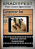Carpenter Ant Pest Control 101