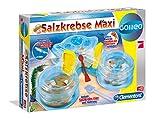 Galileo 69350.4 - Salzkrebse Maxi, Entdeckerspielzeug von Galileo