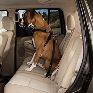 Guardian Gear Nylon Car Dog Harness, X-Small, Navy