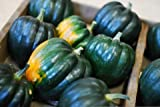 Eden Brothers Squash (Winter) Seeds Acorn Table Queen 1 Pound