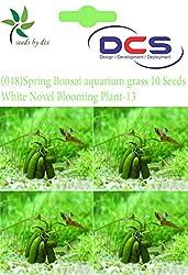 DCS (048) Spring Bonsai aquarium grass 10 Seeds Grass-w-White Novel Blooming Plant-13