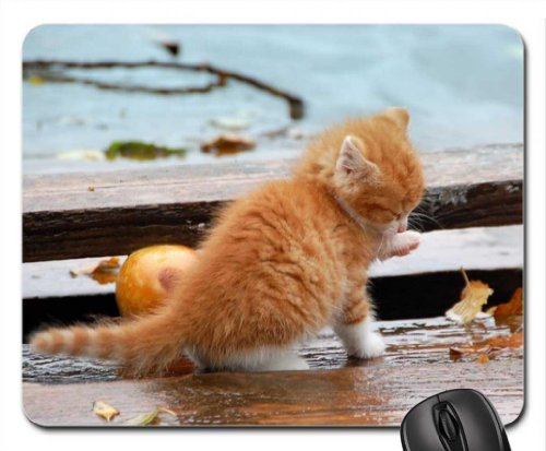 Kitten in the rain ~ for Carmen Mouse Pad, Mousepad (Cats Mouse Pad)