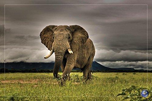 African Majesty Elephant 0000000000697
