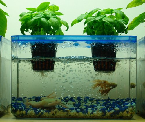 Aquarium fish tank home garden decor hydroponic natural for Growing plants with fish