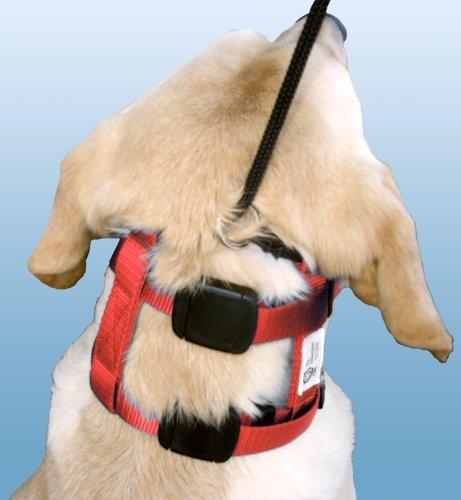 Illusion Dog Collar Amazon