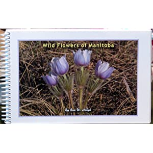 Department of Plant Science - Extension Bulletins - Perennial and