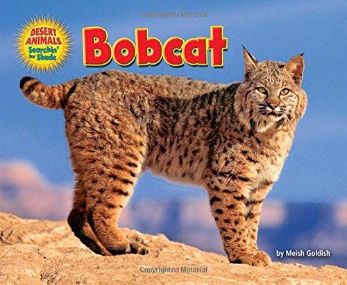 bobcat-desert-animals-searchin-for-shade