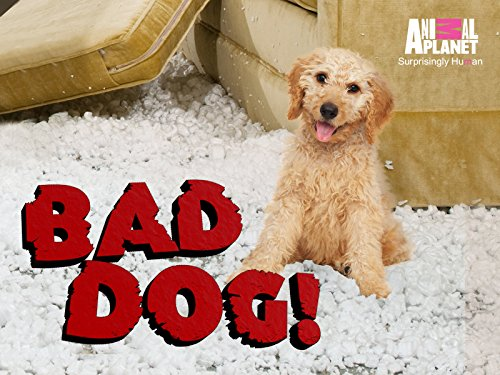 Bad Dog! Season 3