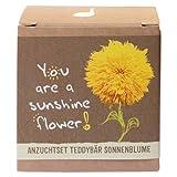 Geschenk-Anzuchtset 'Sunshine Flower' - Teddybär...