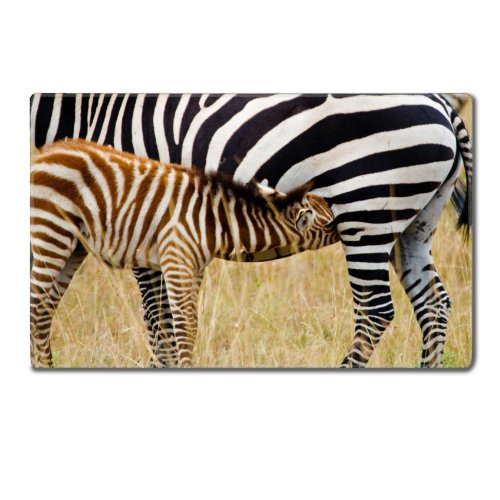 Animal Zebra Wildlife Calf Feeding Pattern Baby Africa Grassland Black White Table Mats Customized Made To Order Support Ready 24 Inch (610Mm) X 14 15/16 Inch (380Mm) X 1/8 Inch (4Mm) High Quality Eco Friendly Cloth With Neoprene Rubber Luxlady Small Desk front-1019058