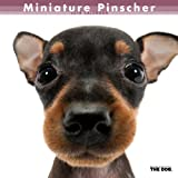 Artlist Collection THE DOG Wall Calendar 2014 Miniature Pinscher