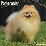 Pomeranian Calendar 2017 - Dog Breed Calendar - Wall Calendar 2016-2017