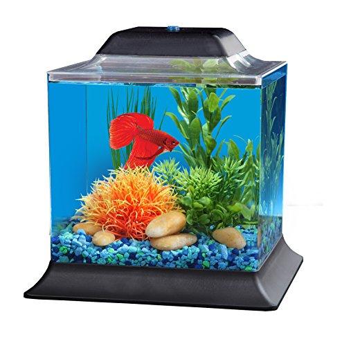 API Betta Kit Cube Fish Tank, 1.5 gallon (Betta Fish Cube compare prices)