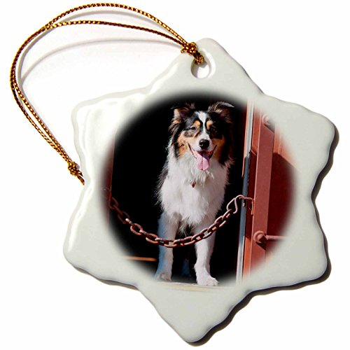 3drose-danita-delimont-dogs-australian-shepherd-in-a-train-car-3-inch-snowflake-porcelain-ornament-o