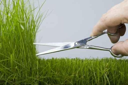 Hand Mower Cutting Scissors a Natural Grass. - 42