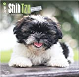 Shih Tzu Puppies 2015 Wall BT