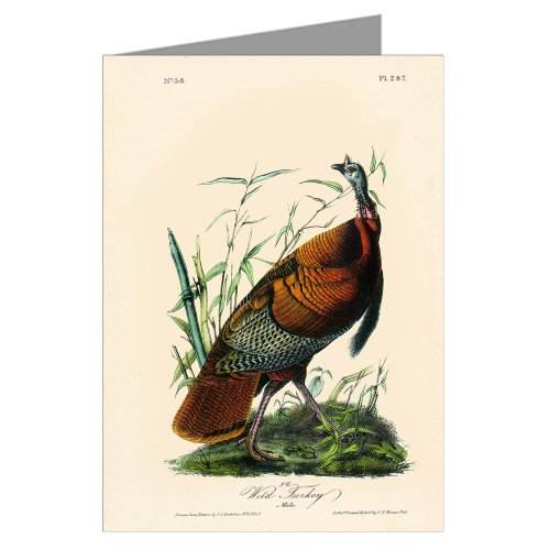 6-biglietti-dauguri-assortiti-di-john-james-audubon-s-celebrata-illustrazioni-di-birds-of-north-amer