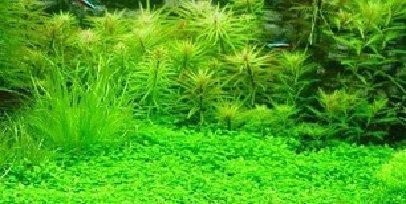 plantas-acuario-decoracion-semillas-de-cesped-plantas-semillas-200-ceeds