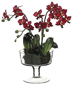 Buy allstate floral craft phalaenopsis plant 17 inch for Allstate floral and craft