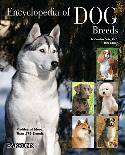 Buy Dog Breeds Now!