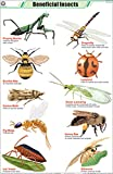 Baneficial Insects Chart (58x90cm)