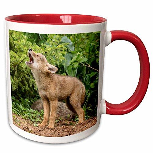 3dRose Danita Delimont - Jaynes Gallery - Coyotes - USA, Minnesota, Sandstone. Howling coyote pup. - 11oz Two-Tone Red Mug (mug_190673_5)