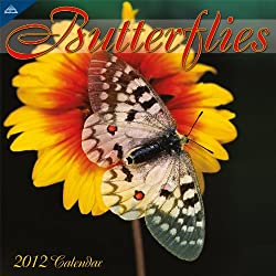 Butterflies 2012 Wall Calendar