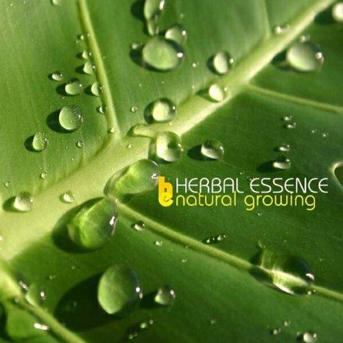 natural-growing-by-herbal-essence