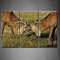 Modern Home Decoration painting 3 Panel Wall Art Two Young Red Deer Fighting And Sparring For A Mate Grassland Pictures Print On Canvas Animal The Picture piece