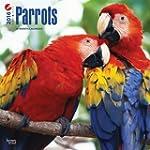 Parrots 2016 Square 12x12 Wall Calendar