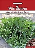 Asia Salat Mizuna Early Dürr Gemüsesamen