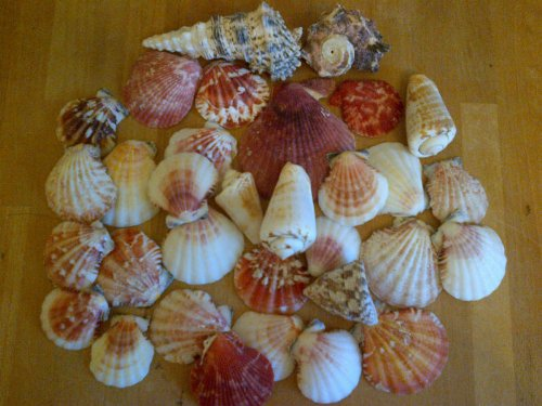 assorted-seashells-set-of-2-bags-600g-nautical-sea-shell-seaside-decor-shabby-chic-approximately-70-
