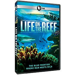 Life on the Reef [Blu-ray]