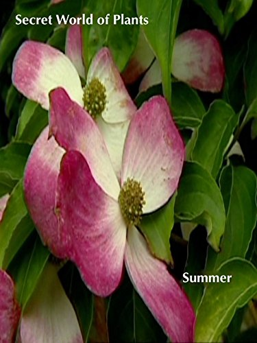 Secret World of Plants: Summer