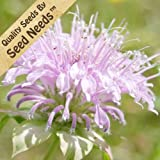 Wild Bee Balm Seeds By Seed Needs-sale
