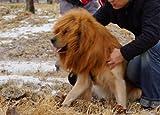 PanDaDa Large Pet Dog Lion neckerchief Collar Wigs Mane Hair Labrador Golden retriever lanmu