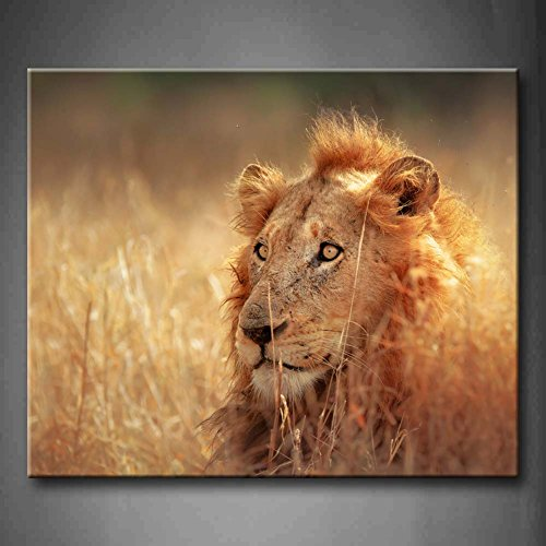Big Male Lion Lying In Dense Grassland Kruger National Park South Africa Wall Art Painting Pictures Print On Canvas Animal The Picture For Home Modern Decoration (Stretched By Wooden Frame,Ready To Hang)