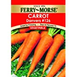 Ferry-Morse Seeds 1253 Carrot - Danver's #126 2 Gram Packet