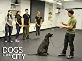 Dogs In The City: You Can Teach Old Dogs New Tricks