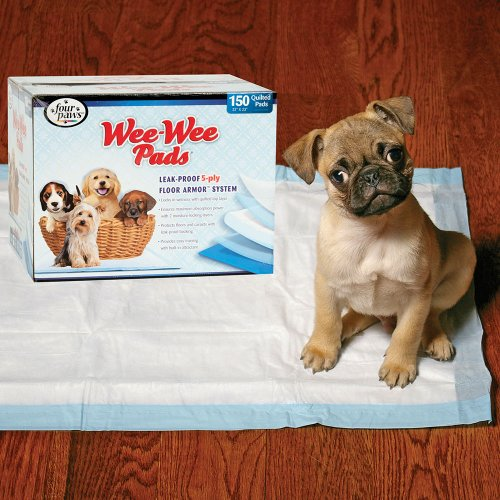 how to wee wee pad train a puppy