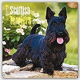 Scottish Terriers 2016 Calendar