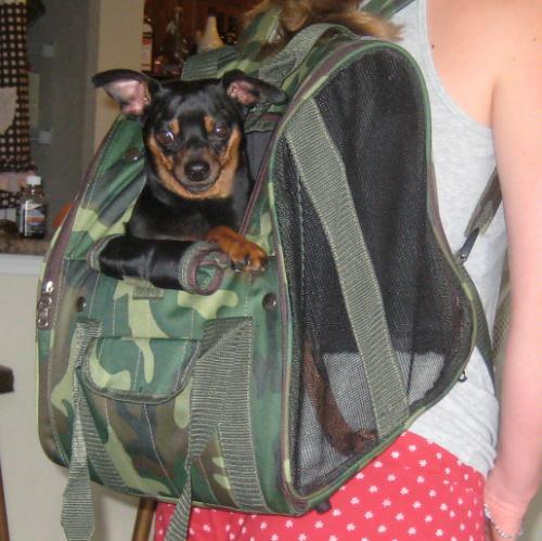 Het Hondenforum Bekijk Onderwerp Rugzak Om Hond Te Dragen