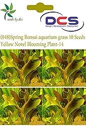 DCS (048) Spring Bonsai aquarium grass 10 Seeds Grass-w-Yellow Novel Blooming Plant-14