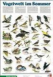 Schreiber Naturtafeln, Vogelwelt im Sommer