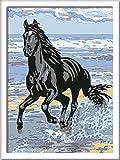 Ravensburger Malen nach Zahlen 28565 - Pferd am Strand, Malset von Ravensburger Spieleverlag