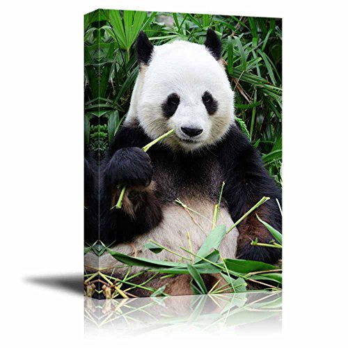 Canvas-Prints-Wall-Art-Giant-Panda-Eating-Bamboo