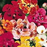 Suttons Seeds 124222 Nemesia Carnival Mix Seed