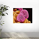 Geranium Pollen Wall Decal - 24 Inches W x 19 Inches H - Peel and Stick Removable Graphic